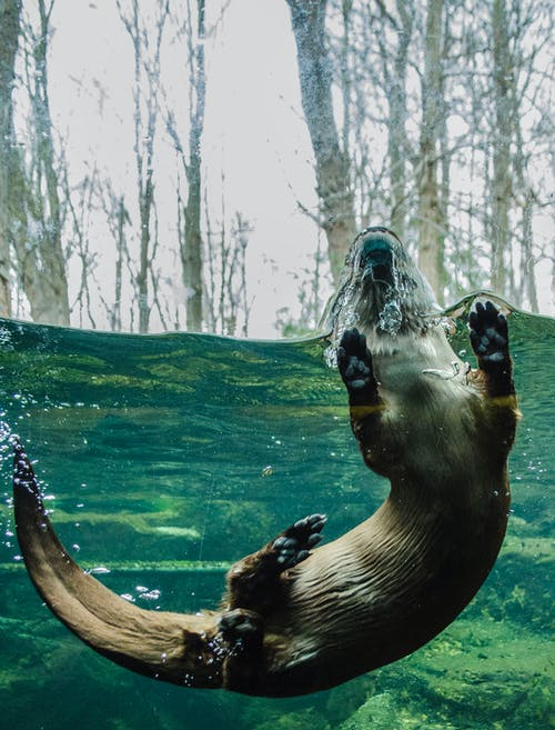 Black and Brown Seal on Body of Water