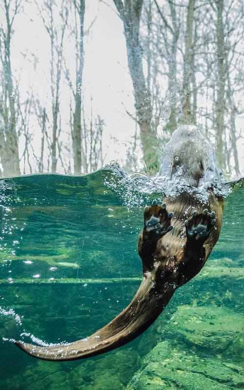 Free stock photo of otter, otter photography, toronto zoo