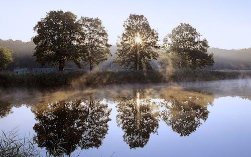 Foto d'estoc gratuïta de alba, arbre, capvespre