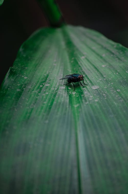 Free stock photo of fly, fly photography, flying insect