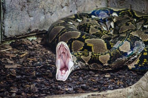Free stock photo of snake, snake photography, zoo photography