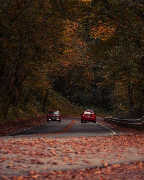 Red Car on Black Asphalt Road in Between Green Trees