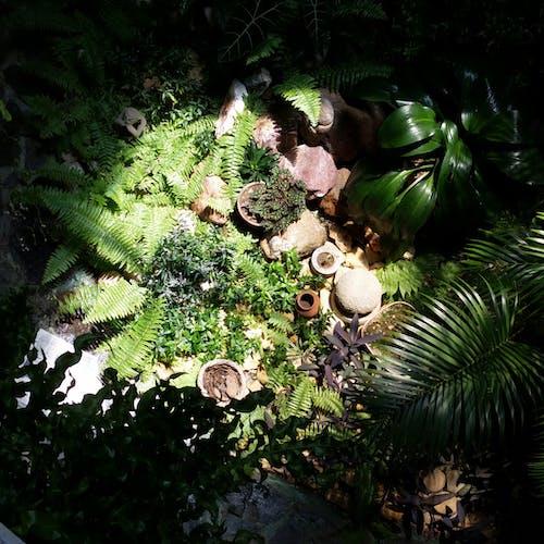 Free stock photo of decoration, detail, garden, green