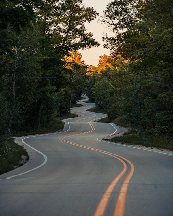Gray Concrete Road Between Green Trees
