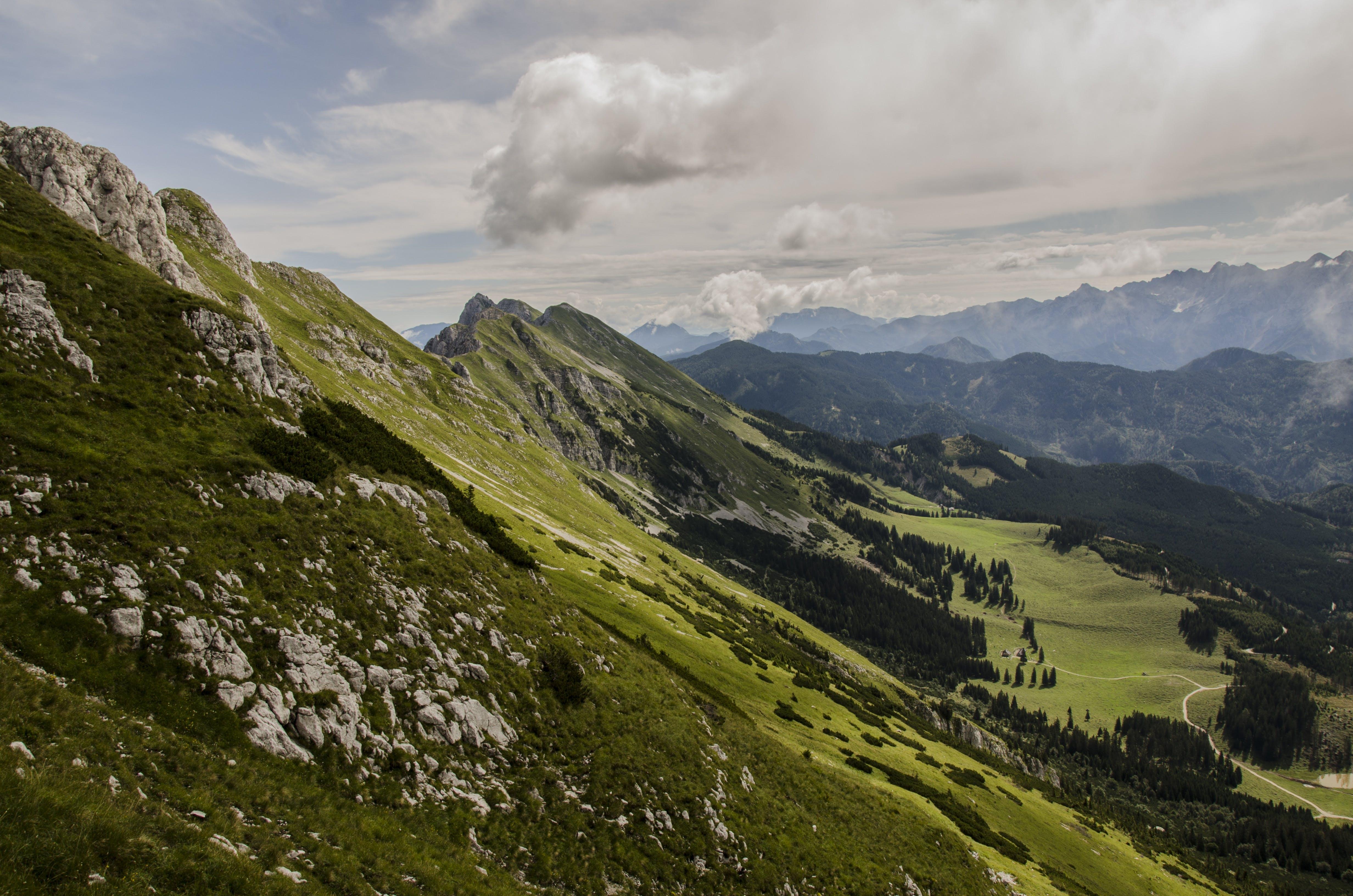alpin, bäume, berge