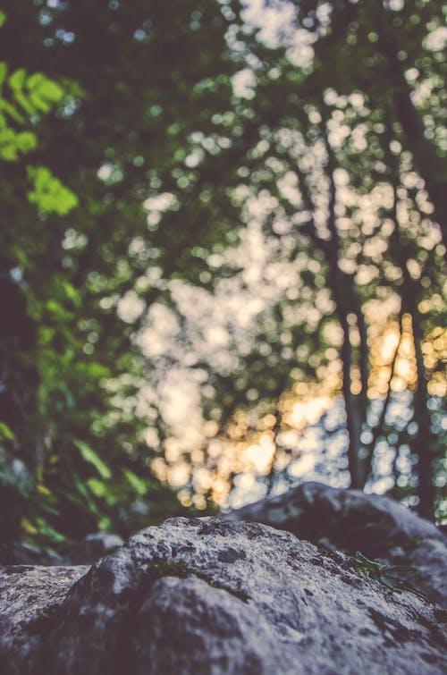 Ảnh lưu trữ miễn phí về ánh sáng, ánh sáng mặt trời, bầu trời, bị mờ