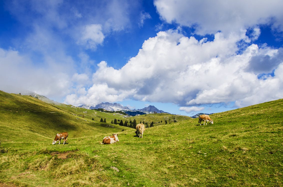 alperna, bakgrund, bergen