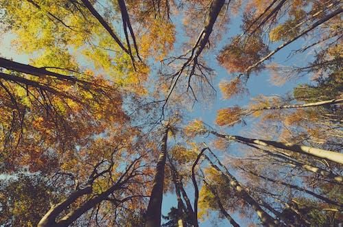 Ingyenes stockfotó ágak, alacsony szögű fényképezés, ég, erdő témában