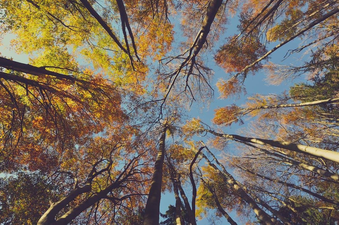 açık hava, ağaç gövdeleri, ağaçlar