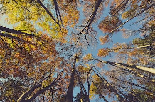 Free stock photo of nature, sky, sunny, trunks