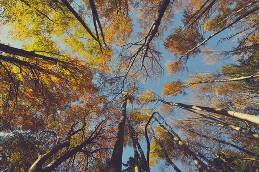 秋日高耸的丛林