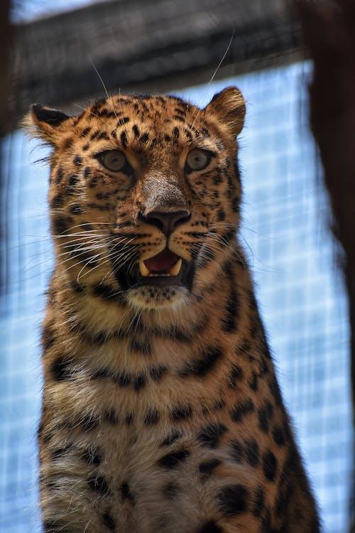 Gratis stockfoto met Afrika, beest, dierenfotografie, dierentuin