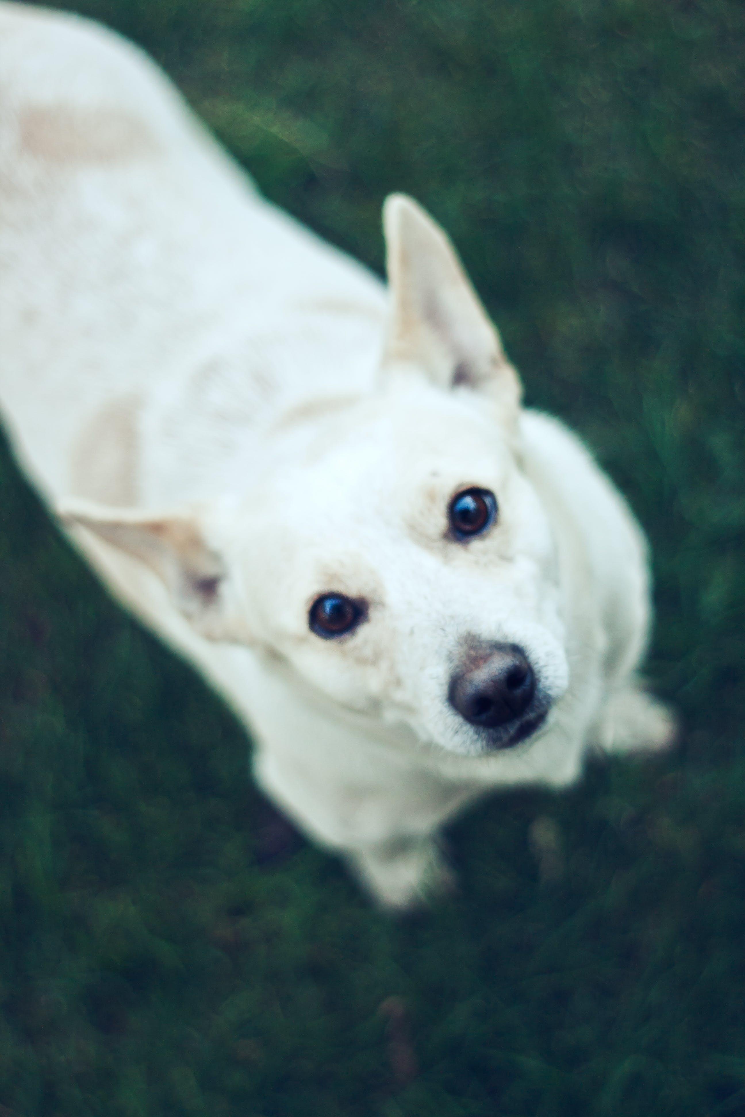 Cute dog II