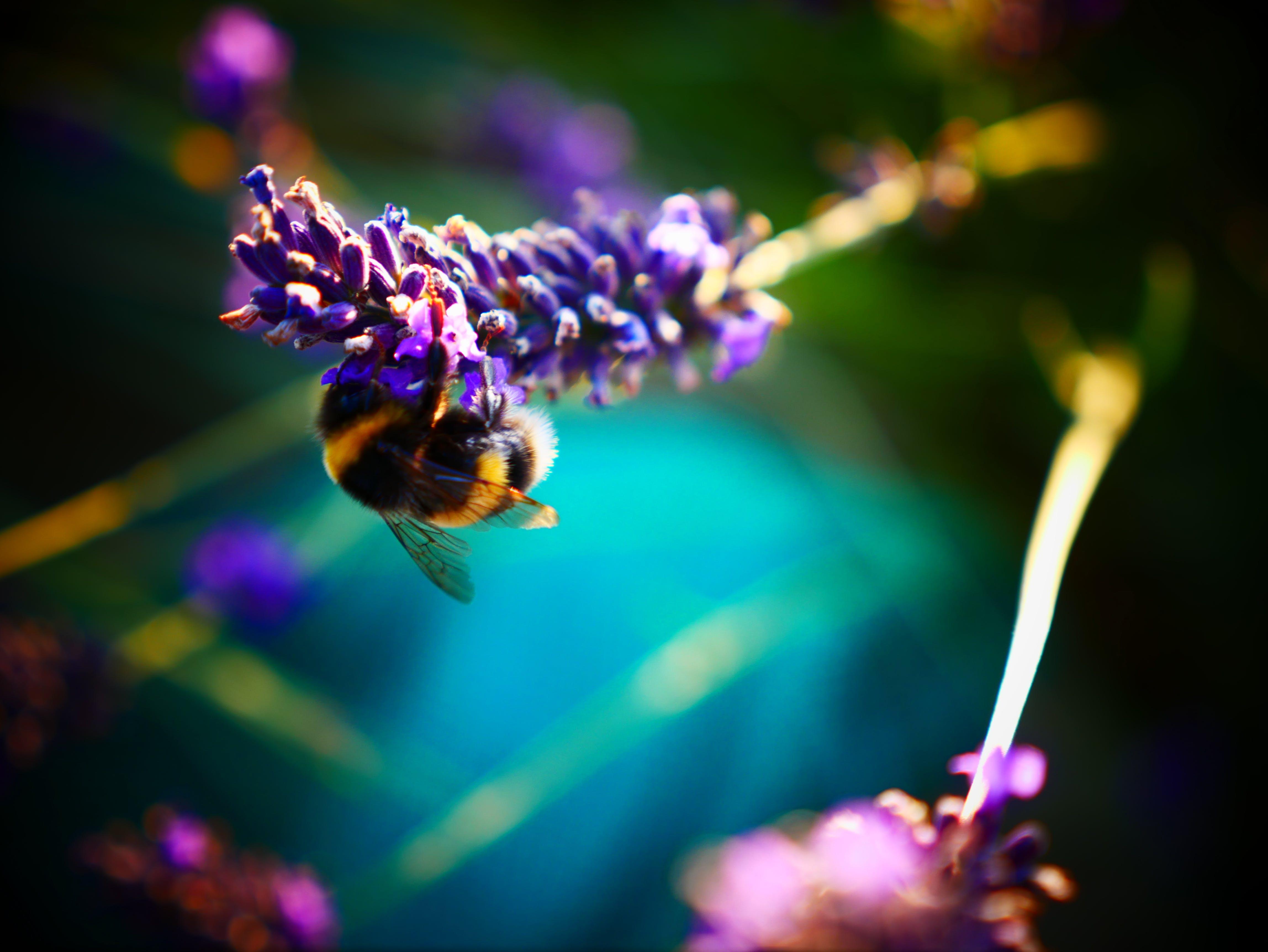 Gratis lagerfoto af bi, blomst, fokus, kanter
