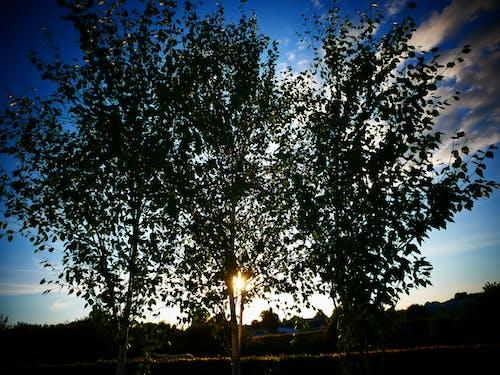 Foto d'estoc gratuïta de arbre, arbres, backround, blau
