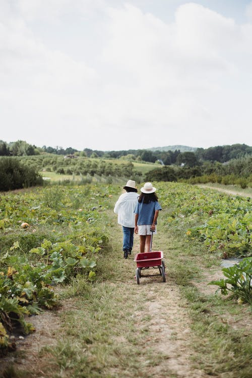 不露面, 傳統, 全身, 农艺学 的 免费素材图片