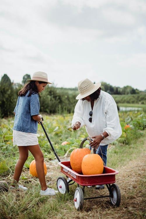 Gratis arkivbilde med agronomi, aktivitet, anlegg, antrekk
