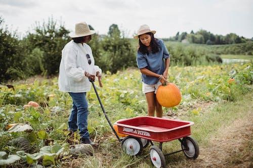 Fotos de stock gratuitas de actividad, afuera, agricultor, agricultura