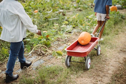 Crop unrecognizable female farmer and young ethnic girl pulling cart with fresh pumpkin