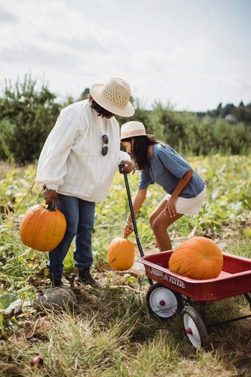 Woman with young girl harvesting pumpkins