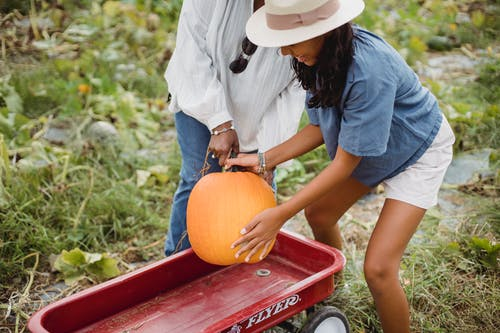 Woman with ethnic daughter harvesting pumpkins