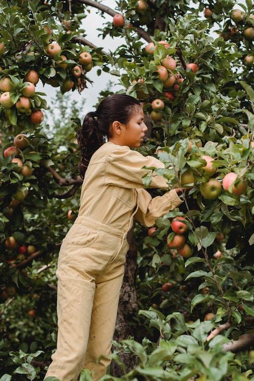 Ethnic girl picking fruits growing on lush tree
