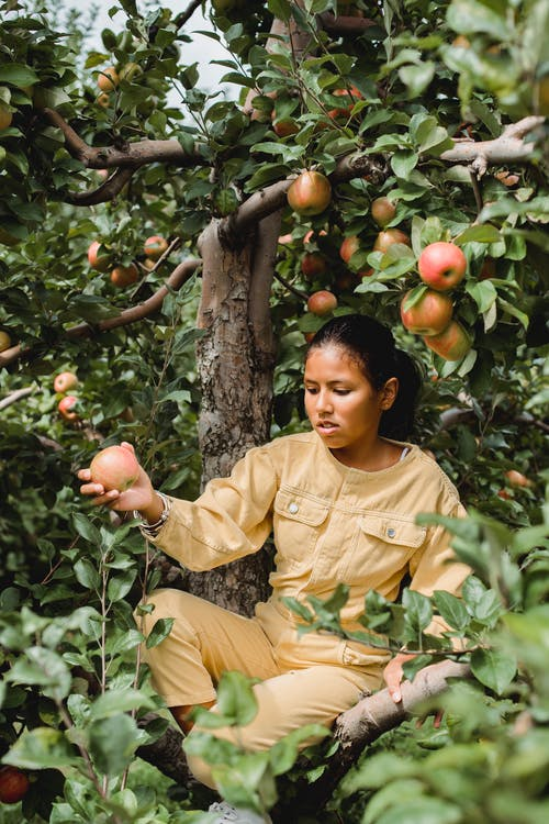 Ethnic girl sitting on tree and collecting apples