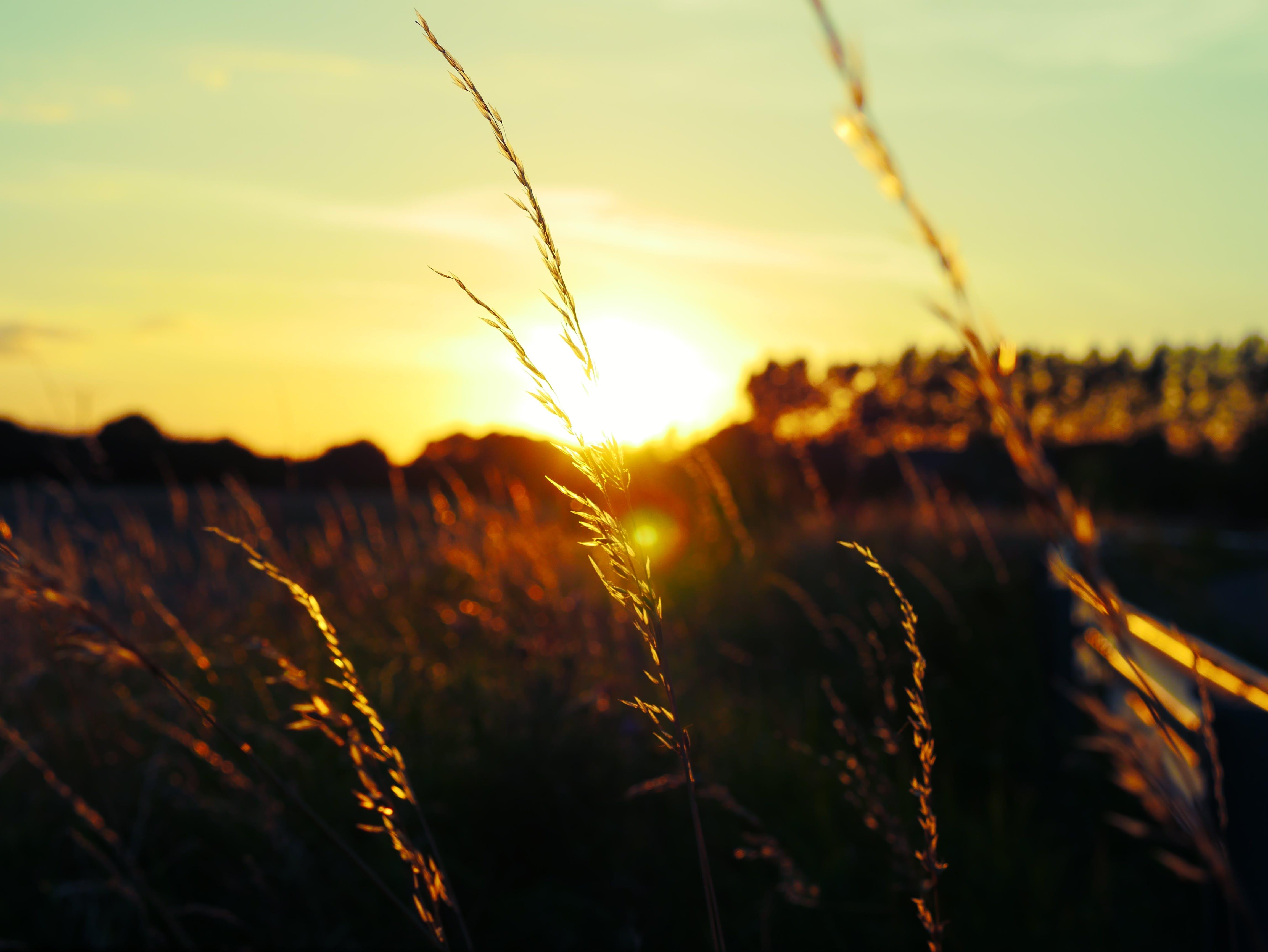 Gratis lagerfoto af 4k, bane, græs, Irland