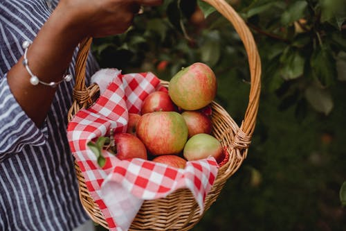 Side view of crop anonymous ethnic female farmer carrying basket with ripe apples while harvesting fruits in garden