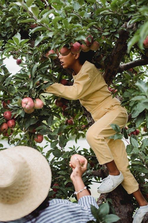 Etnisch Tienermeisje Dat Fruit Op Boom Oogst