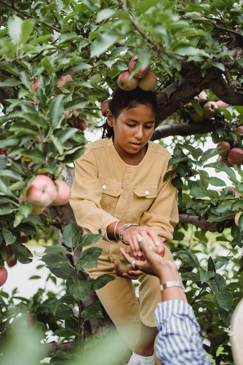 Ethnic teen girl picking apples with farmer