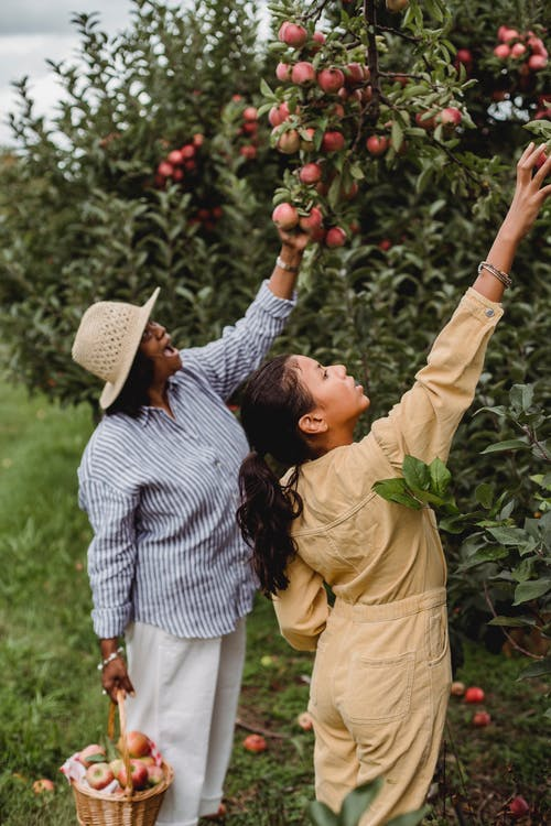 Man and Woman Holding Red Apple Fruit
