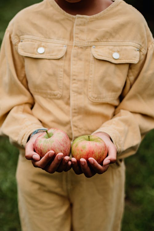 Crop anonymous teenage girl demonstrating ripe apples in palms collected in farm during harvest