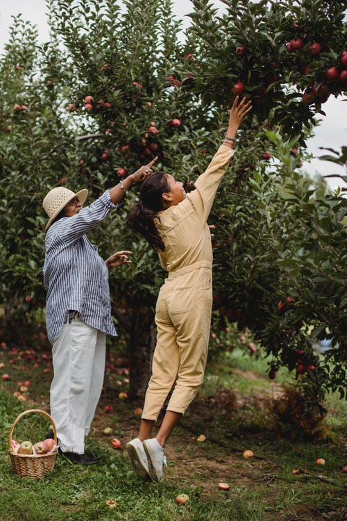 Woman with teen girl harvesting apples