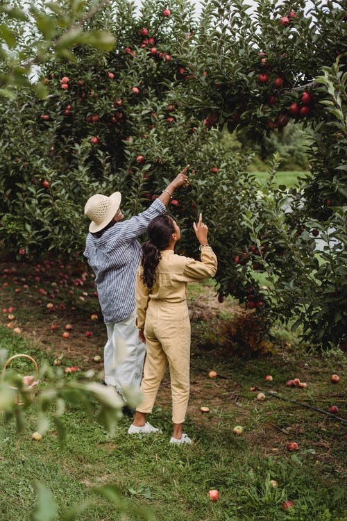 คลังภาพถ่ายฟรี ของ faceless, กลางแจ้ง, การเกษตร, งาน