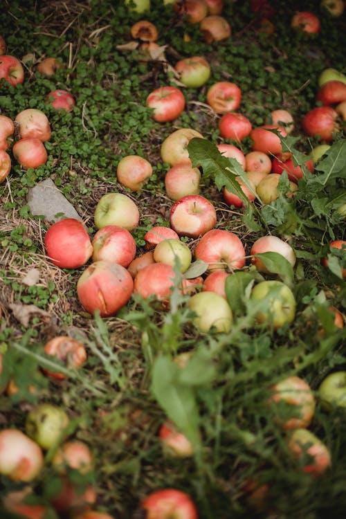 Photos gratuites de aliments, apple, bio, biologique