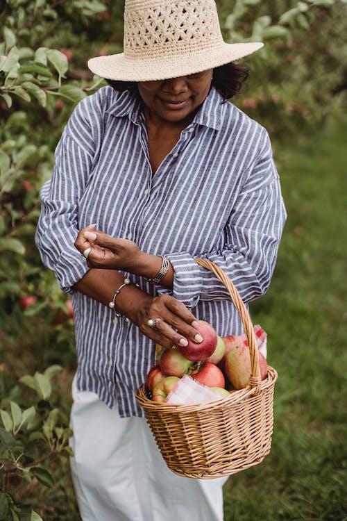 Hiszpanie Kobieta Zbiera Dojrzałe Jabłka W Okolicy