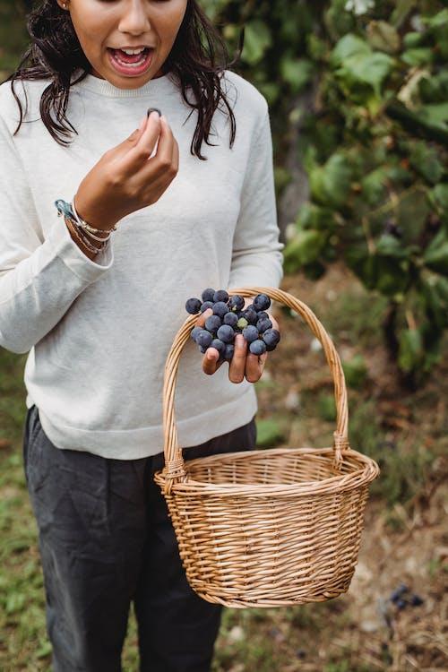 Fotos de stock gratuitas de agricultura, al aire libre, básquet, baya