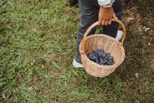 Fotos de stock gratuitas de agricultura, al aire libre, anónimo, básquet