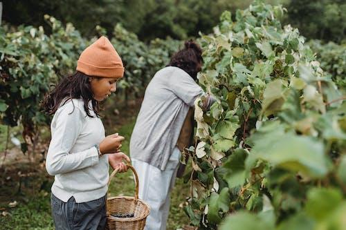 Kostenloses Stock Foto zu agronomie, anonym, anonymous, asiatische frauen