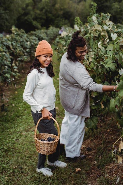 Fotos de stock gratuitas de agricultura, agronomía, al aire libre, alegre