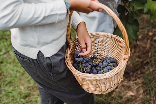 Fotos de stock gratuitas de agricultura, agronomía, al aire libre, anónimo
