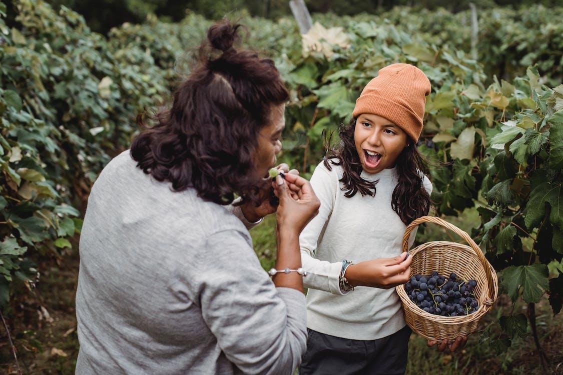 Ethnic mother tasting ripe grapes near daughter in vineyard
