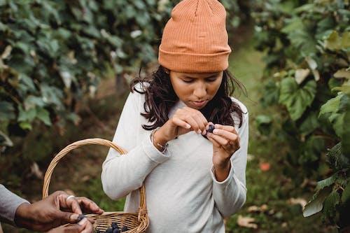 포도원에서 인식 할 수없는 농부 근처 포도와 민족 소녀 자르기