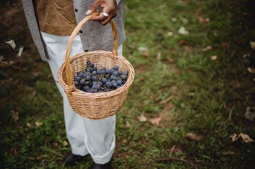 Foto profissional grátis de agradável, agricultor, anônimo, ao ar livre