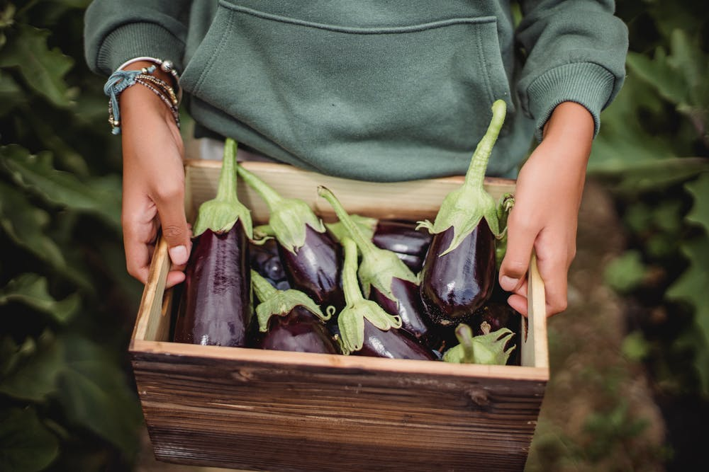 Person holding a box with fresh eggplants. | Photo: Pexels