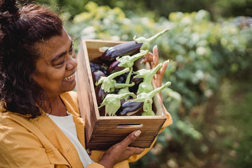 Happy middle aged ethnic lady demonstrating box with ripe eggplants in garden