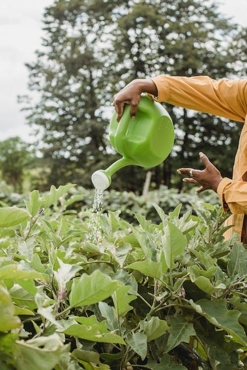 Watering of Crops using Watering Pot