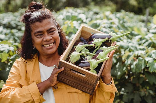 Joyful middle aged ethnic female farmer in casual clothes smiling and carrying wooden box with heap of fresh organic eggplants while working on plantation on sunny day