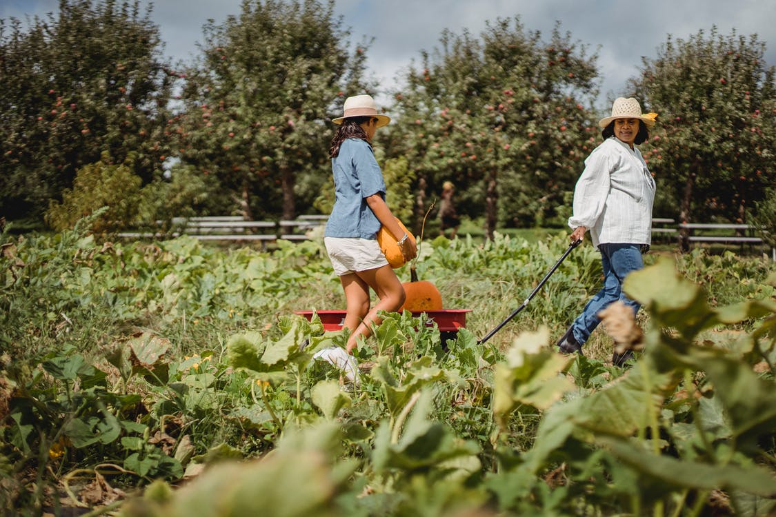 Side view of ethnic female farmer with anonymous girl carrying ripe pumpkins in garden cart in countryside